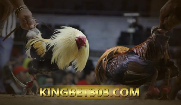 Agen S128 Sabung Ayam
