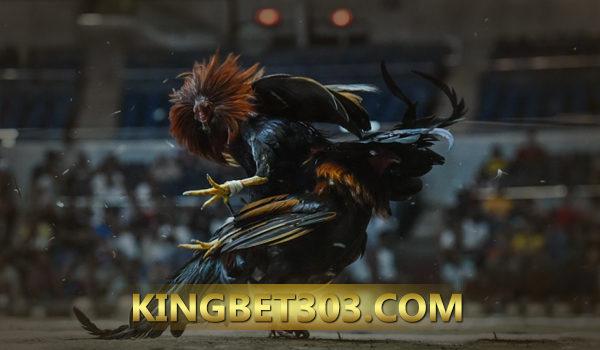 Situs Sabung Ayam Live