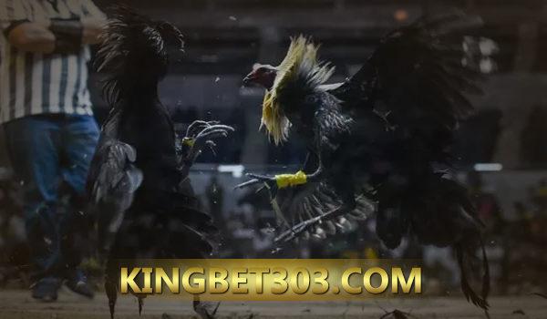 Website Sabung Ayam S128