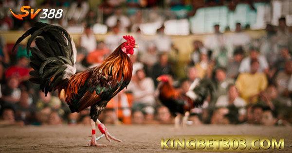 Permainan Sabung Ayam Online