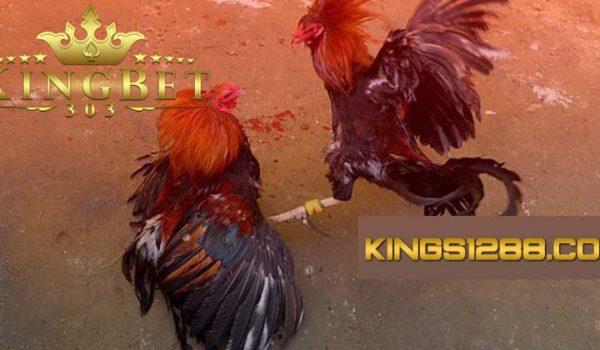 Daftar Sabung Ayam Online