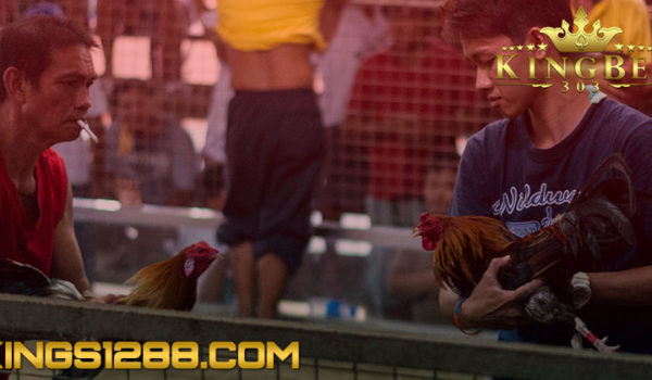 Situs Sabung Ayam Online