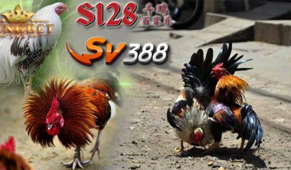 Arena Live S128