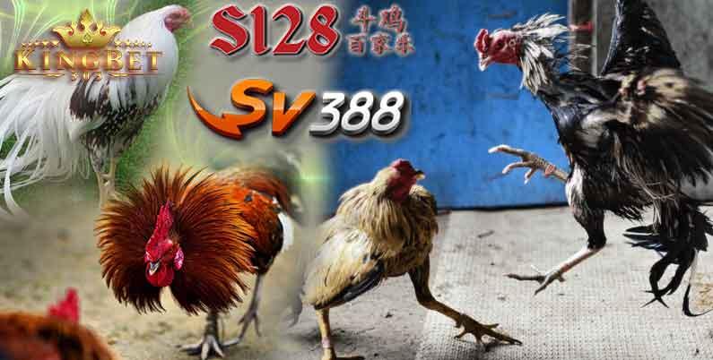 S128 Ayam Online