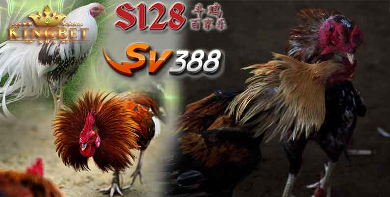 Sabung Ayam S1288